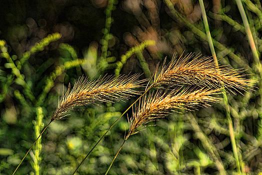 Wild Grass by Rick Friedle