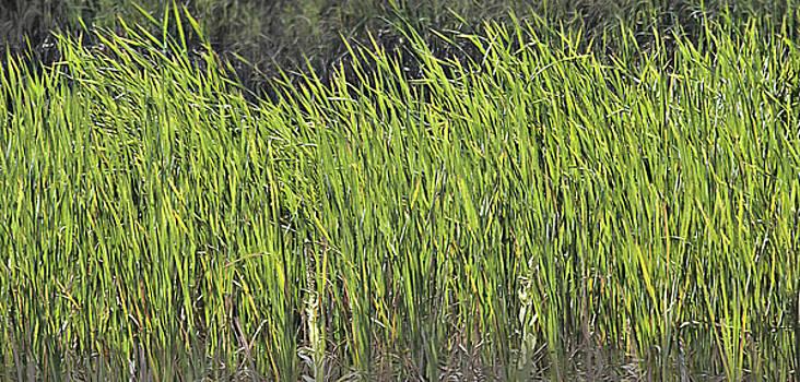Steve Ohlsen - Wild Grasses - Abstract