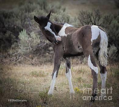 Wild Horse Colt by Veronica Batterson