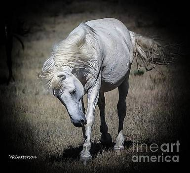 Wild Horse Leader by Veronica Batterson