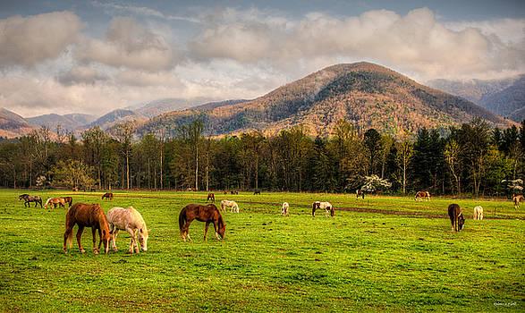 Wild Horses by Rebecca Hiatt