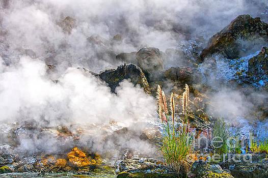 Patricia Hofmeester - Wild living earth in New Zealand