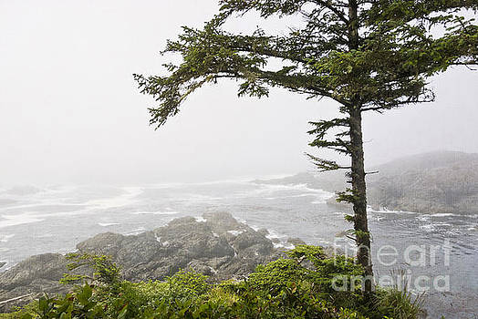 In the Fog on the Wild Pacific Trail by Maria Janicki