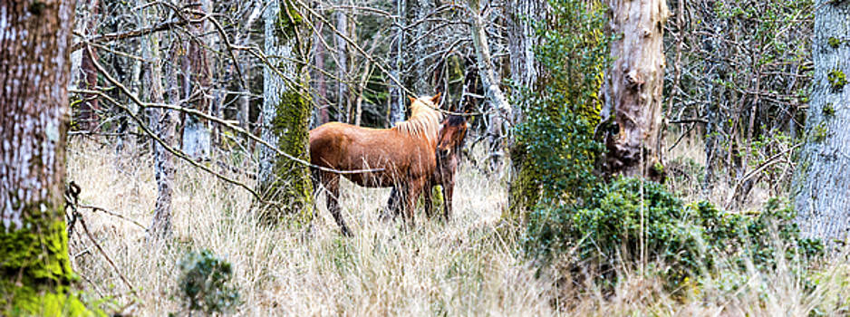 Steven Poulton - Wild Ponies Greet