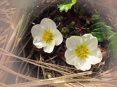 Joyce Dickens - Wild Strawberries