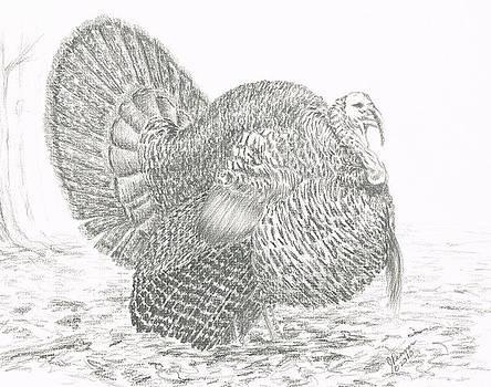 Wild Tom Turkey by Joann Renner