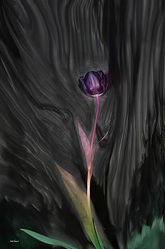 Linda Sannuti - Wild Tulip