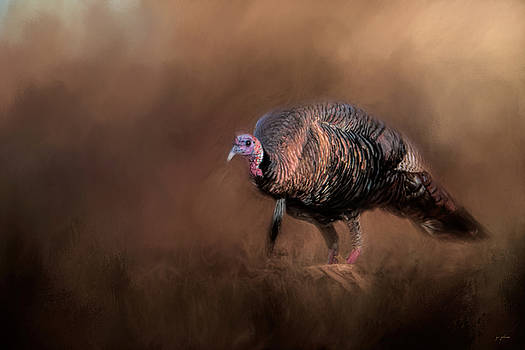 Jai Johnson - Wild Turkey In The Woods