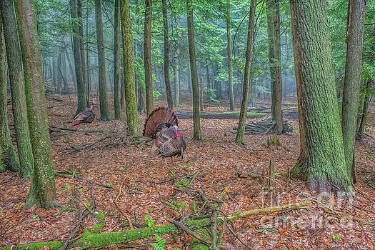 Wild Turkeys in Forest by Randy Steele