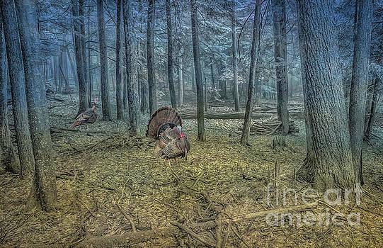 Wild Turkeys in Forest Version Two by Randy Steele