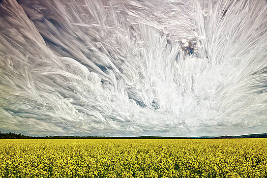 Wild Winds by Matt Molloy