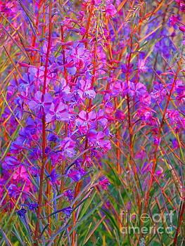 Wildflower Cascade by J J Everson