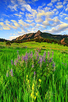 Wildflower Colors by Scott Mahon