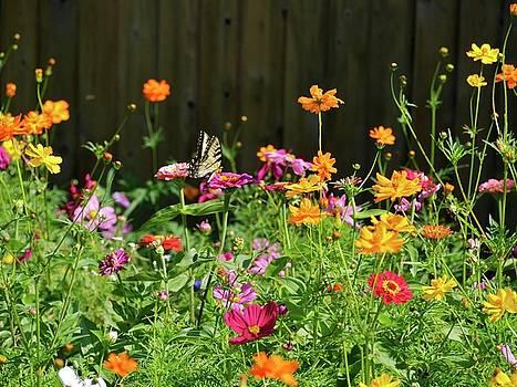 Wildflower Fun by Patricia McKay
