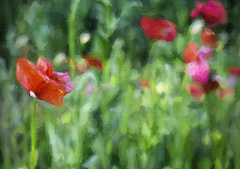 Steve Ohlsen - Wildflower Garden 2