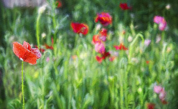 Steve Ohlsen - Wildflower Garden