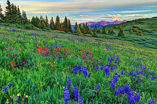 Wildflower Hill by Scott Mahon