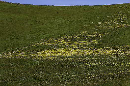 Wildflower Hillside by Garry Gay
