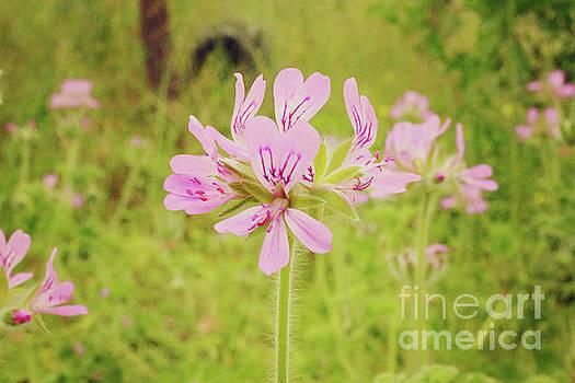 Wildflower III by Cassandra Buckley