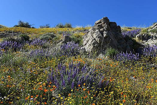 Wildflower Mix by Scott Cunningham