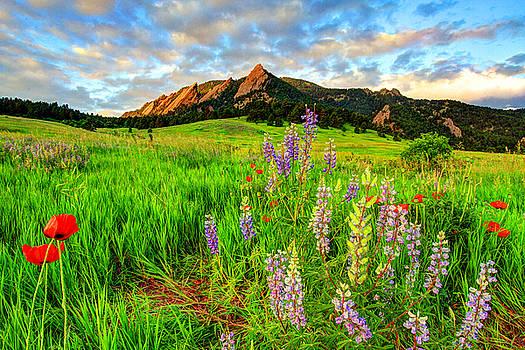 Wildflower Mix by Scott Mahon