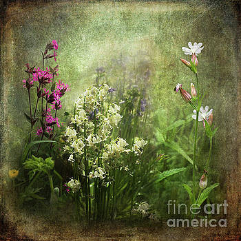 Wildflower Symphony by Liz Alderdice