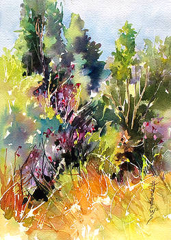 Wildflower Trail, Provence by Rae Andrews