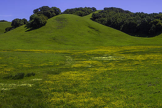 Wildflowers And Green Hills by Garry Gay