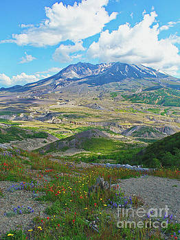 Wildflowers and Mt. St. Helens 4 by Ansel Price