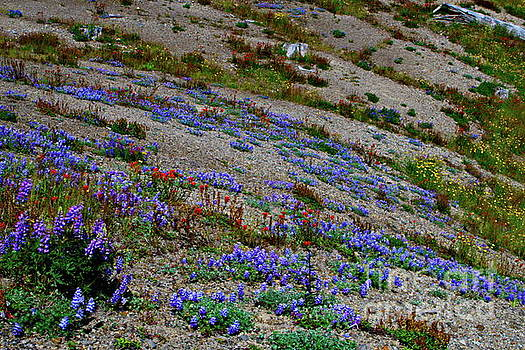 Wildflowers by Ansel Price