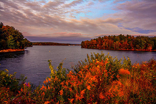Wildflowers Cowan Lake by Randall Branham