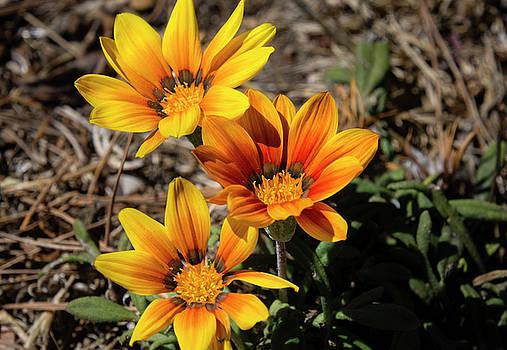 Wildflowers by Dennis Reagan