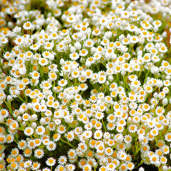 Wildflowers by Holly Kempe