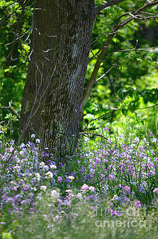 Wildflowers in the Forest by Deb Halloran