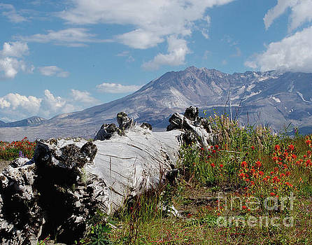 Wildflowers on Mt. St.Helens by Ansel Price