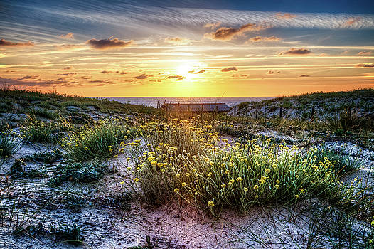 Debra and Dave Vanderlaan - Wildflowers on the Sand Dunes