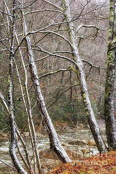 Williams River First Snow by Thomas R Fletcher