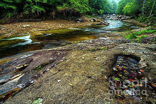Williams River in September by Thomas R Fletcher