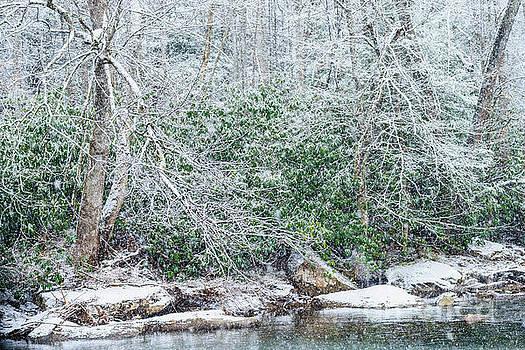 Williams River Snowfall by Thomas R Fletcher