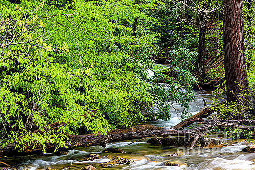 Williams River Tributary by Thomas R Fletcher