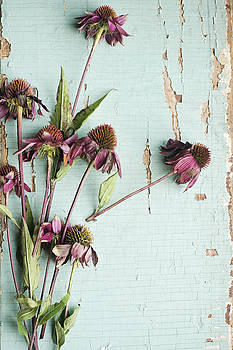 Wilted Coneflowers On Chipped Wood Background by Di Kerpan