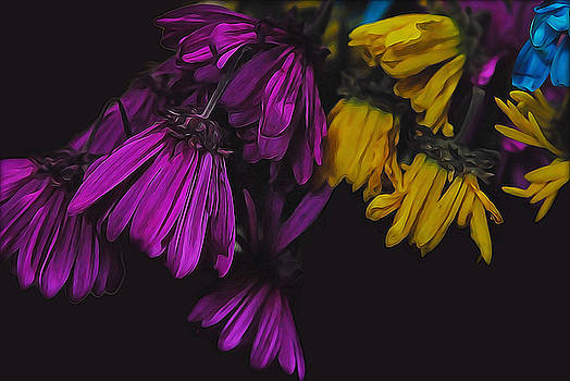 Cindy Boyd - Wilting Spring daisies