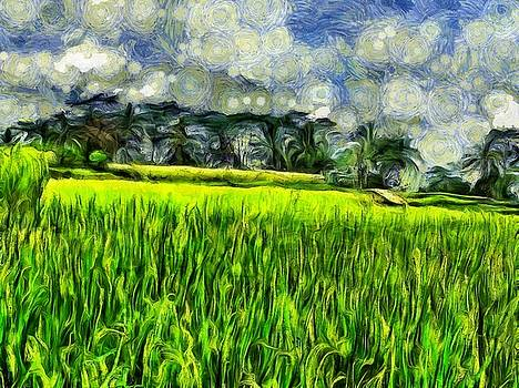 Wind and fields by Ashish Agarwal