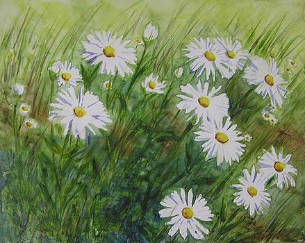 Wind Blown Daisies by Karla Horst