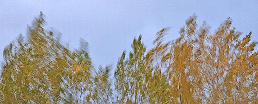 Steve Ohlsen - Wind in the Trees