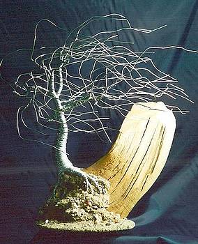 Wind Swept on Driftwood - Wire Tree Sculpture by Sal Villano
