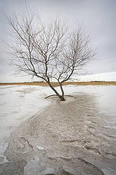 Wind Swept by Patrick Ziegler