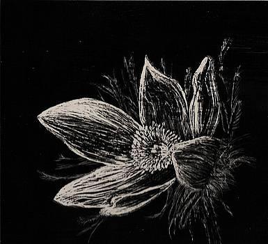 Tony Murray - Windflower