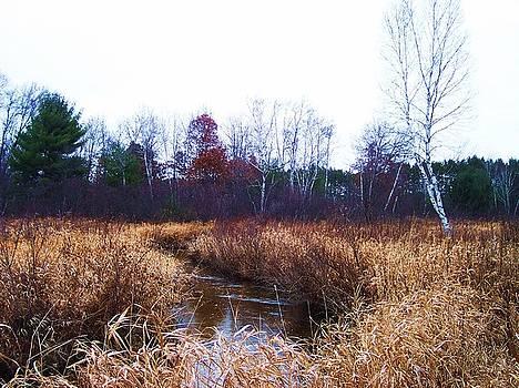 Winding Creek 1 by Anna Villarreal Garbis