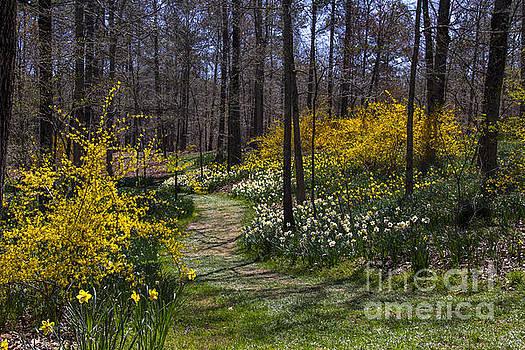 Barbara Bowen - Winding Path through the Garden